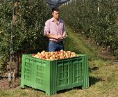 Handsome Farmer With Tablet Standing Beside Large Plastic Crate Full Of Apples In Modern Orchard poster
