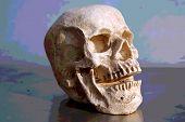 Laughing Human Skull. Halloween Human Skull. Evil Skeleton. Laughing Skull.  poster
