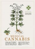 Hand-drawn Botanical Vector Illustration In Retro Style With Plant Of Medical Cannabis. Page Of An O poster