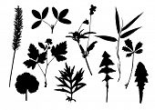 Set of vector silhouettes of leaves and branches