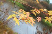 Arce elimina en el otoño sobre el agua.