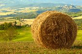 pic of hayfield  - golden hayfield in a bright blue sky in  tuscany - JPG