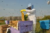 Beekeeper woman at her favorite work