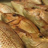 Golden Snapper At A Fish Market