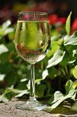 Tropical White Wine