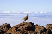 High Altitude Bird