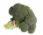 Fresh Uncooked Broccoli