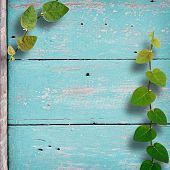 Grunge Wood Background With Ivy Climbing Tree.