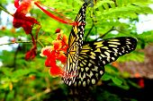 Butterfly on Bohol