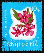 Postage Stamp Albania 1965 Nerium Oleander, Flower