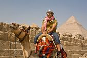 Camel In The Famous Giza Pyramids