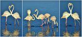 Collage Flamingo