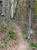 Appalachian Trail in the Spring