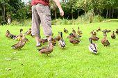 A man feeding some ducks