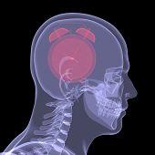 Постер, плакат: Красный будильник в голову