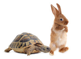 pic of the hare tortoise  - Testudo hermanni tortoise and rabbit make a race on a white isolated background - JPG