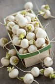picture of turnips  - Many small white freshly picked turnips in basket for sale on farmers market - JPG