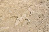 Sand sculpture ??of crocodile.