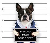 foto of felons  - a mugshot of a bad dog - JPG
