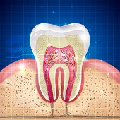 picture of cross-section  - Beautiful tooth cross section illustration deep blue background and sparkling lights around - JPG