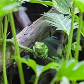 View Of Green Monkey Frog