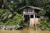 Jungle Boat House