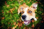 stock photo of puppy eyes  - adorable dog in a park - JPG