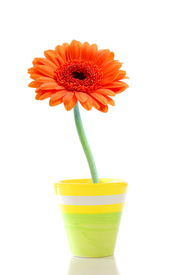 image of flower pot  - beautyful summer flower in pot with copyspace - JPG