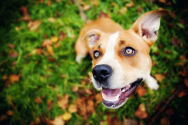 stock photo of seeing eye dog  - adorable dog in a park - JPG
