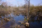 Withered Flooded Forests