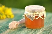 jar of delicious honey with rapeseed flowers and honey dipper