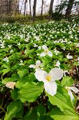 Trillium Bed - Vertical Wide