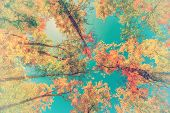 Autumn Leaves Up In The Trees - Retro, Faded