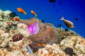 Reef with a variety of hard and soft corals and tropical fish. Maldives Indian Ocean.