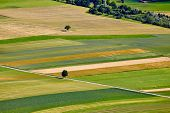 foto of plowed field  - Aerial view of agricultural fields - JPG