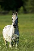 Horse in a clearing