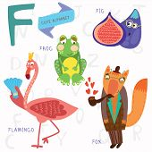 Very Cute Alphabet.f Letter. Flamingos, Figs, Fox, Frog.