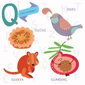 Very Cute Alphabet.q Letter. Quokka,quiche,quand Ong,quail.