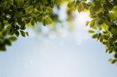 Fresh Spring Natural Leaf Background