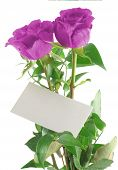 image of purple rose  - purple roses with blank love note - JPG