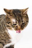 Cats Taste