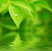 pic of rain-drop  - Green leaf with water drops, macro, nature background with water reflection