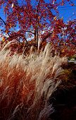 Autumn Colors and Textures