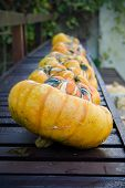 Pumpkins In A Row On Bench