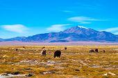 Tara Salar in Atacama