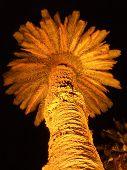Lit Palm Tree At Night