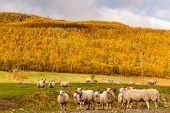 Sheep's looking in an amazing landscape