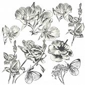 Collection Of Vector Hand Drawn Flowers For Design