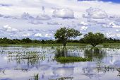Pantanal in Mato Grosso. The Pantanal is the world's largest tropical wetland areas located in Brazil , South America