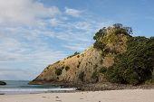 Headland At New Chum Beach New Zealand
